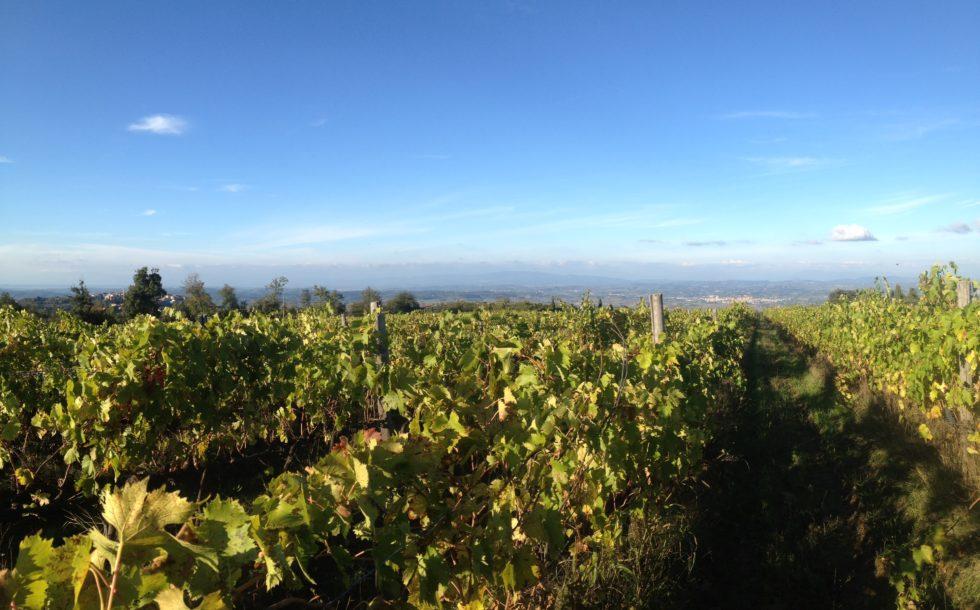 Organic Winery Firenze